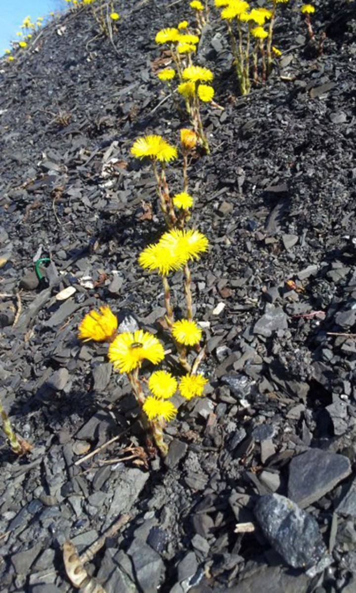 Decouverte biotope terril Blegny 2012-03-15 12.46.14 © Blegny-Mine Asbl 04-2021