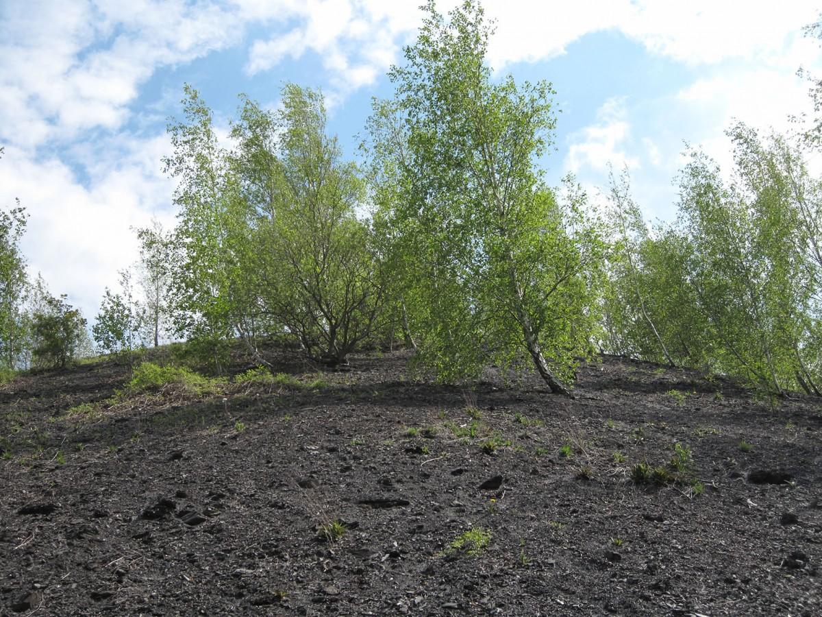 Decouverte biotope terril Blegny O-IMG_7202 © Blegny-Mine Asbl 04-2021