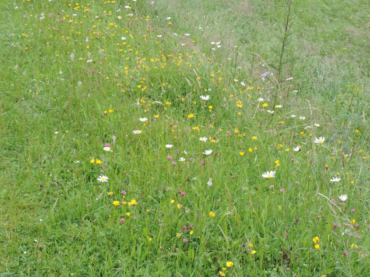 20 juin - Secrets du monde végétal de notre région