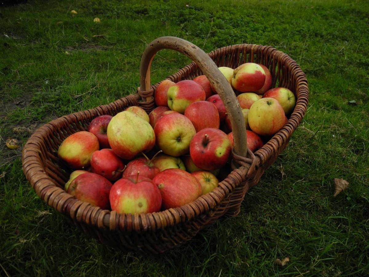 Harvest-2647099