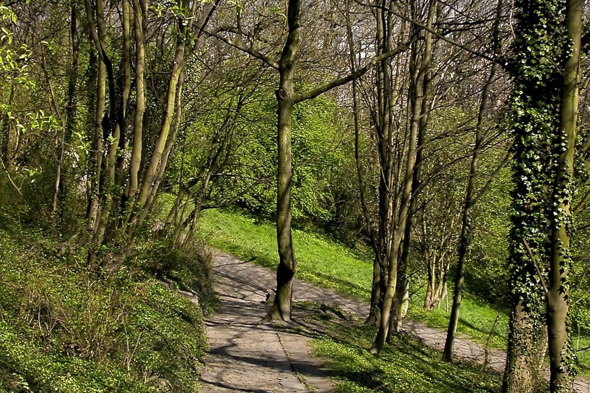 Bois des Carmélites © Office du tourisme de Liège