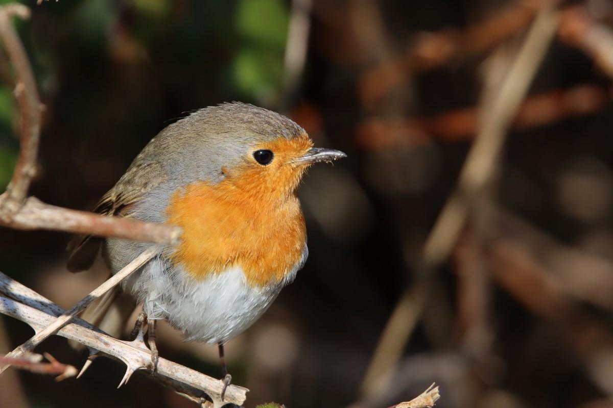 25 juillet - Visite guidée ornithologique ©Flickr_Patrick Dardé