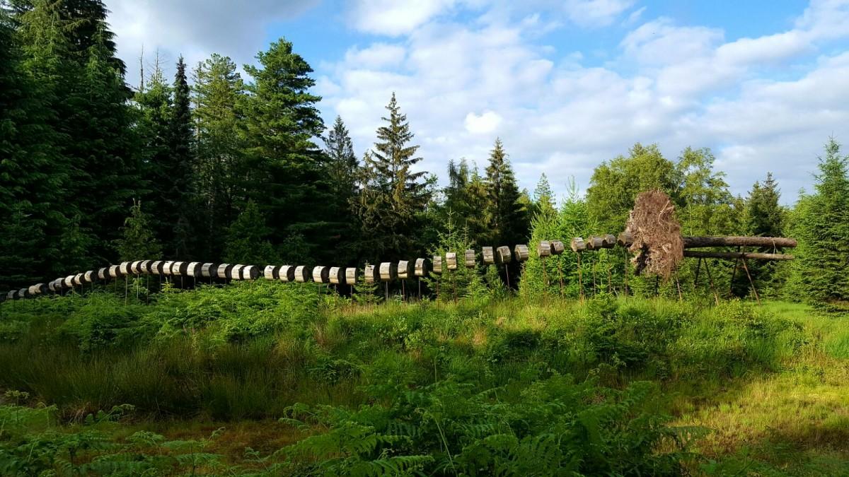 Arboretum de Mefferscheid_©Cellule Communication Ville de Baelen (7)