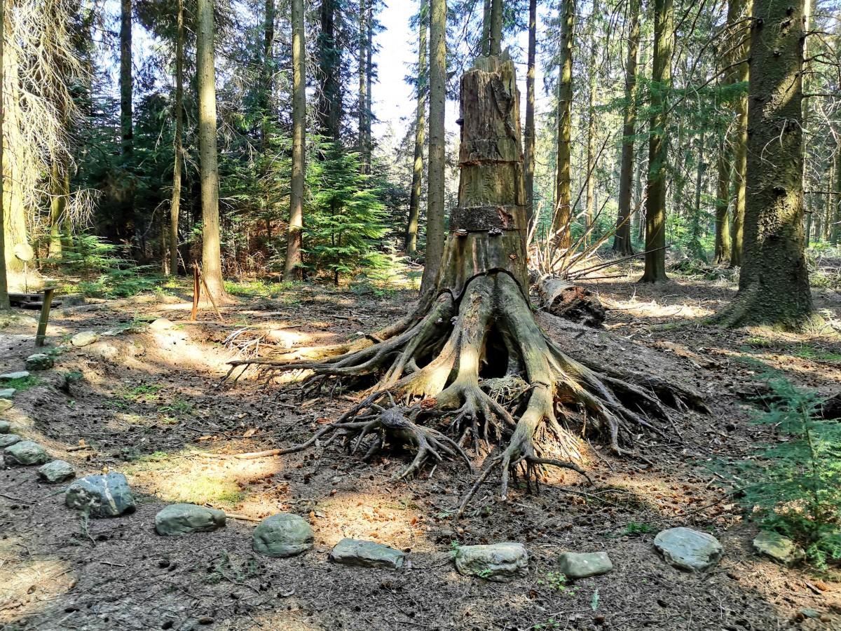 Arboretum de Mefferscheid_©Cellule Communication Ville de Baelen (6)
