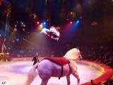 Liège - Festival du Cirque européen - spectacle