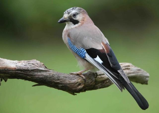 Initiation aux chants des oiseaux | ©