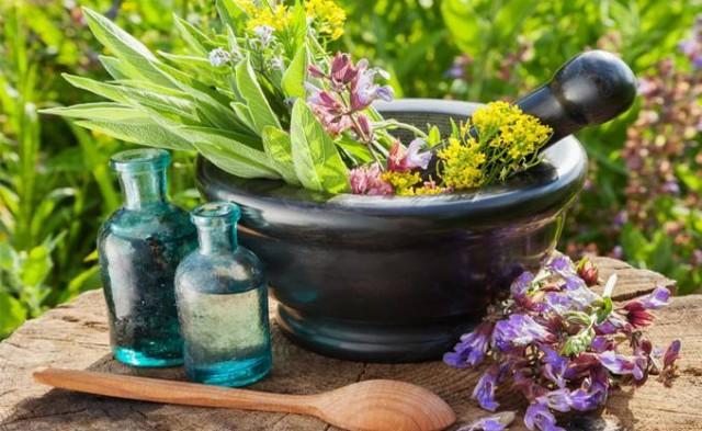 Balade thématique - Plantes à récolter et faire sécher | ©