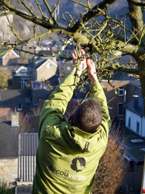 Les découvertes de Comblain - formation taille des arbres fruitiers | ©