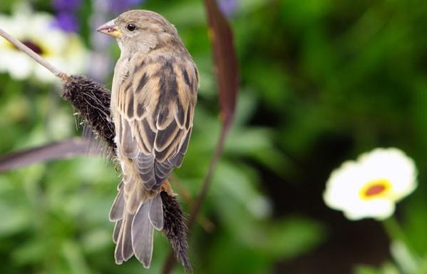 Balade ornithologique 2 | ©