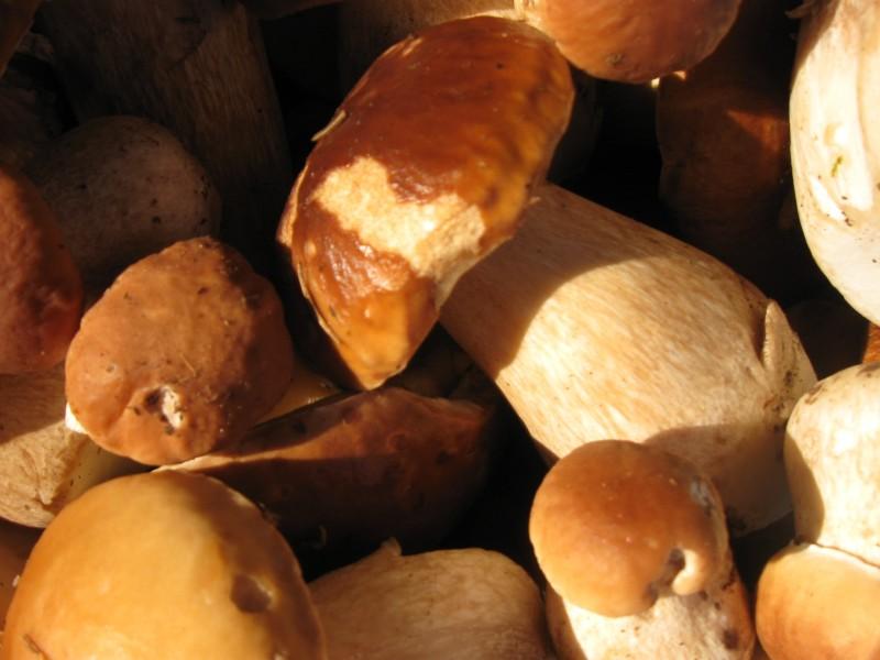 Les Balades des découvertes de Comblain - Le monde mystérieux des champignons