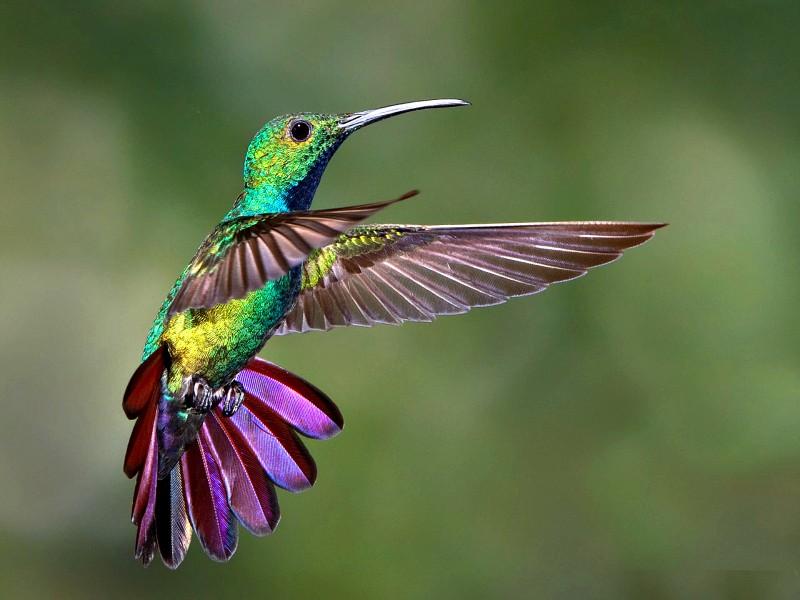 Hummingbird-freeze-frame