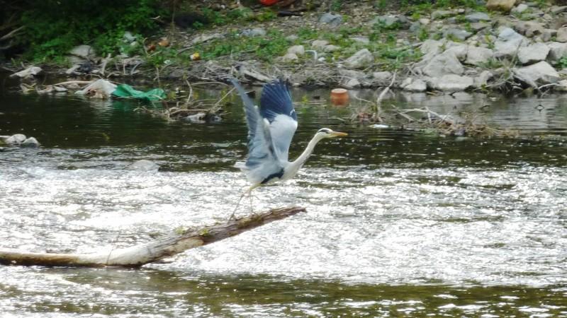 Eveil aux oiseaux
