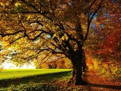 Balade guidée : balade aux couleurs de l'automne