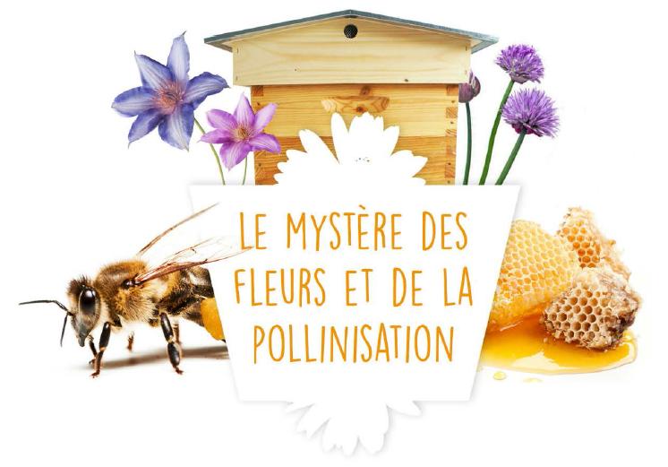 Le mystère des fleurs et de la pollinisation