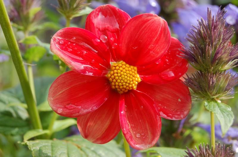 Chokier - Marché aux Fleurs - Illustration