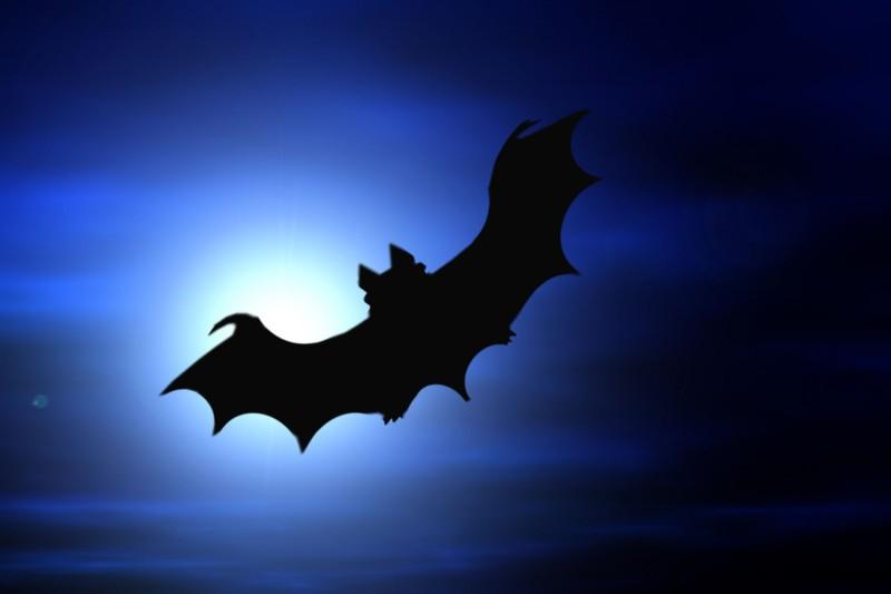 Flémalle - Balade contée Halloween