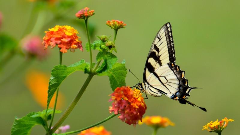 Liège - Observatoire du Monde des Plantes - Papillons en liberté