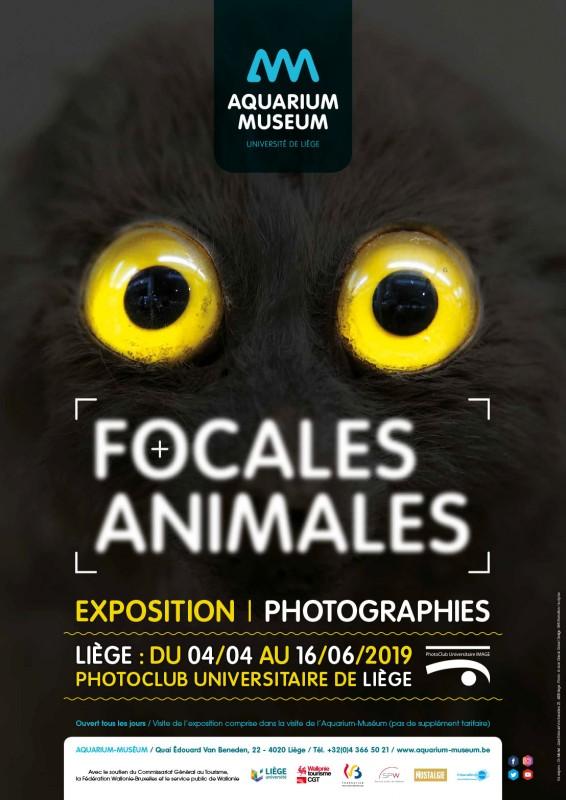 Liège - Aquarium-Museum - Affiche exposition Focales animales