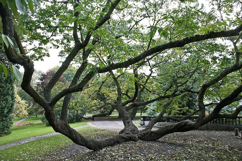 Liège - Visite guidée - Les arbres du Jardin Botanique