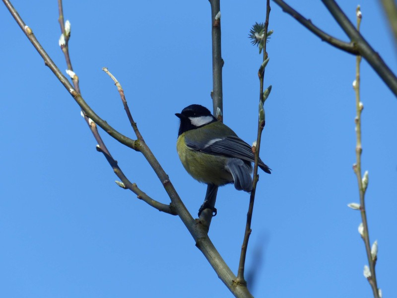 BLEGNY-balade Oiseaux ©Christian Desart