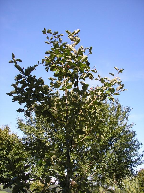 19 juillet - arboretum Coingsoux