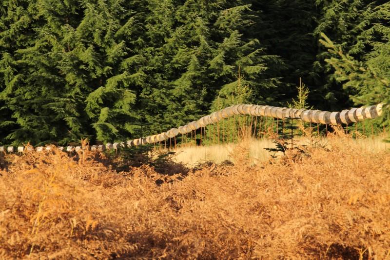 Arboretum_©MTPV (8) - Copie