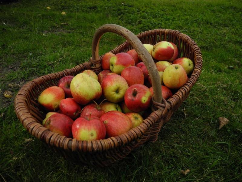 Panier en osier avec des pommes