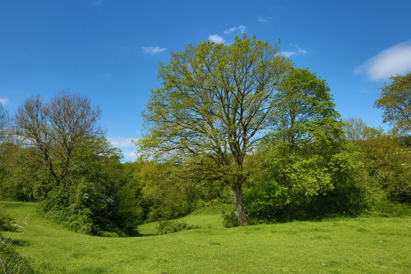 Balade animée - Paroles d'arbres