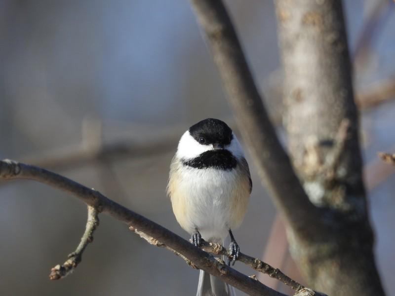 25 avril - Visite guidée ornithologique ©Flickr_Michèle Daoust