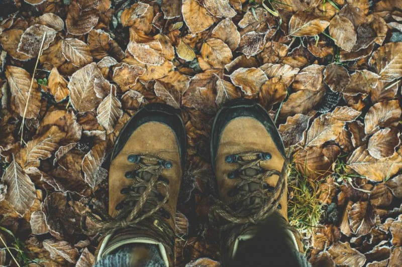 Balade automne Héron