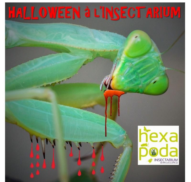 Halloween Hexapoda - Affiche